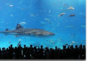 Churami-Aquarium_pic