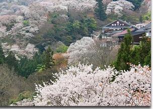 Mount-Yoshino_pic